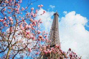 shutterstock_386452393_Paris_Blossoms