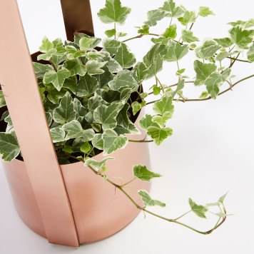 Wylda Planter | LF Design