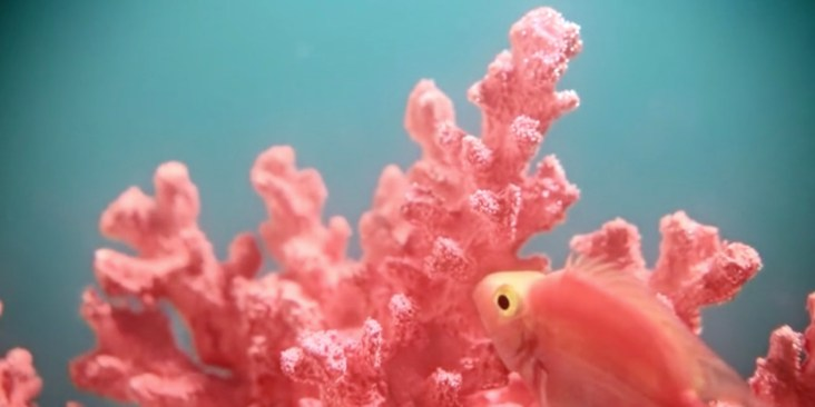 Resultado de imagen de living coral