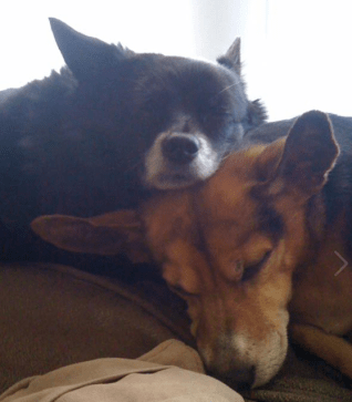 brothers at rest