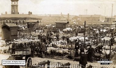 Cross Lane Cattle Market, Salford, showing some of the cows, top, and sheep, bottom, assembled in pens at the market. Date unknown. (Available from: http://www.manchesterpostcards.com/pendleton-postcards.htm)