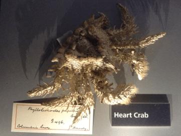 heart-crab-1