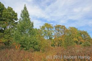 A feather tamarack stands sentinel at the fen's northern border.