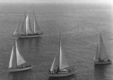 Stormmeeuw 1956 HvH rechts