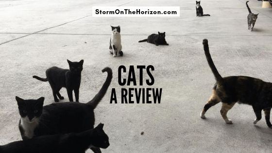 many cats sitting on pavement. Storm on the horizon title card: a review of cats