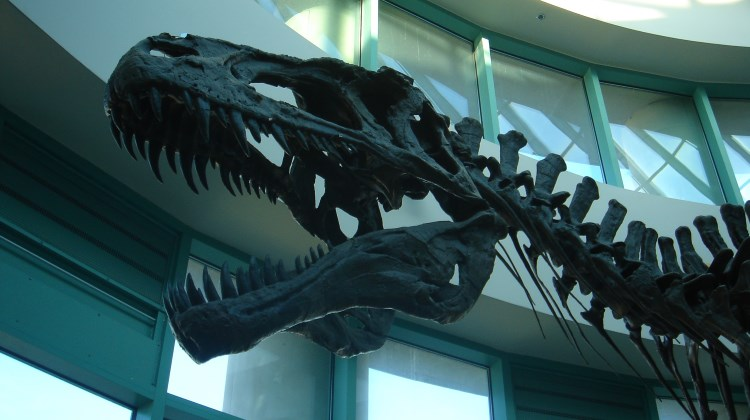 Dinosaur fossils at the North Carolina Museum of Natural Sciences in Raleigh, NC
