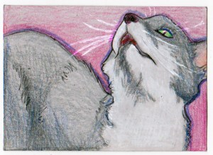 ATC of a Cornish Rex Cat