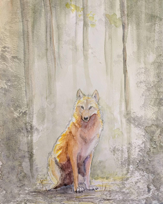a wolf stands in the golden light of the woods