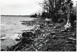 The following day, the eastern shore of the lake was choked with debris.