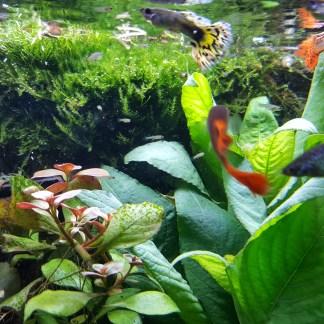 Freshwater Aquaria