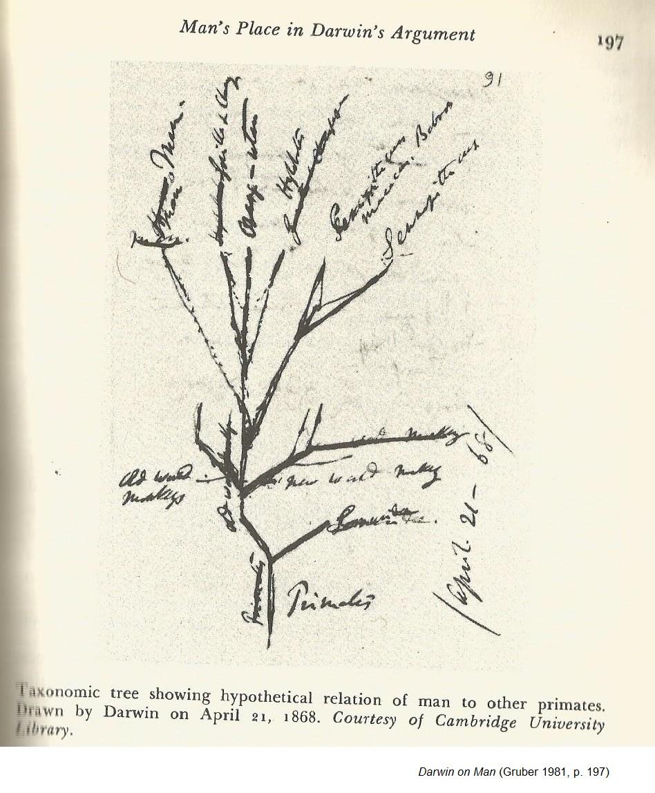 medium resolution of darwin s tree of life diagram 1 gruber 1981 p 197 1868