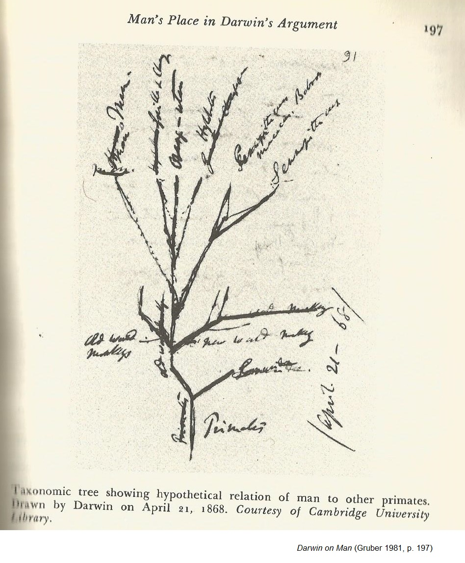 small resolution of darwin s tree of life diagram 1 gruber 1981 p 197 1868