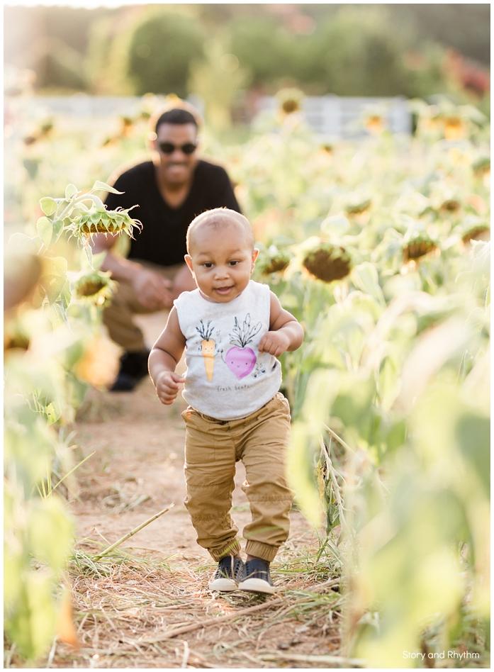 Dorothea Dix sunflower field