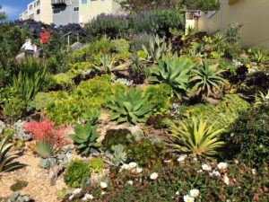 16th Avenue Succulent Garden
