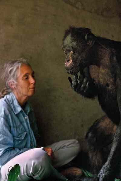 "Jane Goodall chimpanzee ""A Wild Life"" photographer book Africa wildlife"