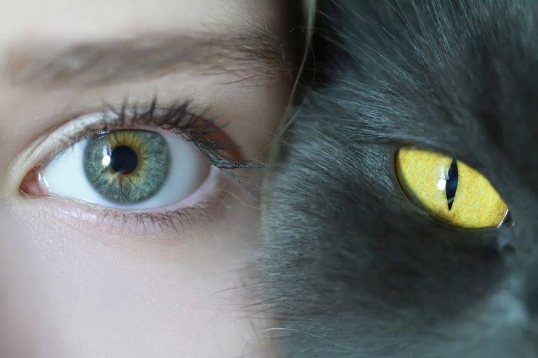 human-and-cat-eyes.jpg.838x0_q80.jpg.pagespeed.ce.9uM-tIJbKZ