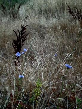 """Straw Flowers"" ~ Rogue River, Oregon"
