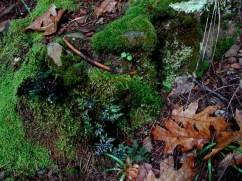 """Forest Floor at Jenkinson Lake"" ~ Sly Park, California"