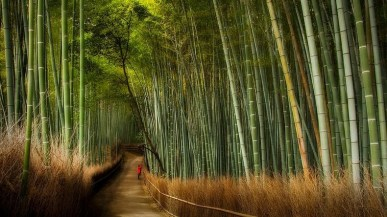 Sagano Bamboo Forest - Japan