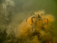 Spider crabs - at first I was in awe of Xavier finding one, now I see them everywhere...