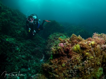 Grace, one of our DM on her first <25C dive!