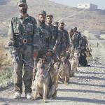 landmine dogs