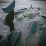 beached whales