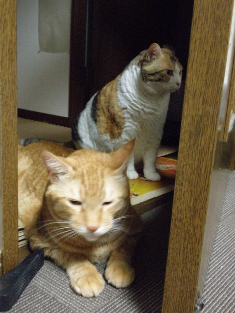 Yanagi Kouji's cats