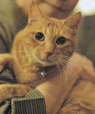Ono Fuyumi's cat