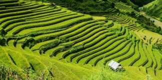 Heading to Vietnam and looking for inspiration & help? In this interview, Irish backpacker, Ciara, gives us her top Vietnam travel tips from her recent trip to the country. Click through to read now...