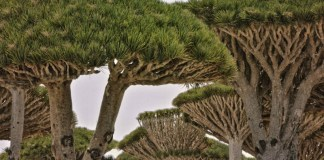 Socotra, Yemen | 13 Fascinating Mystery Landmarks in Asia