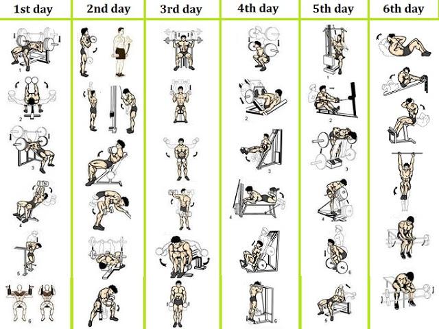 Top Twelve برنامج تدريب كمال اجسام للمبتدئين Pdf