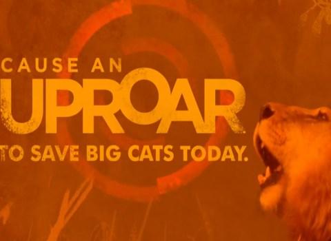 BIG CATS INITIATIVE