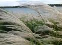 Risley Lakeshore