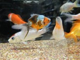 Walmart saves the environment_fish