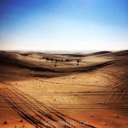 postcards-from-arabian-desert-camel-bedouin-http://stowandtellu.com