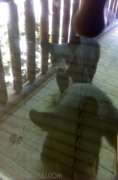 bear-sighting-gatlinburg