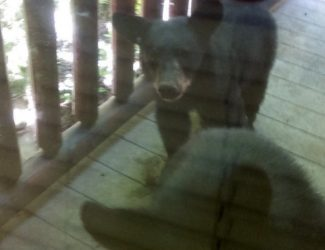 bears-in-gatlinburg