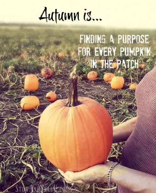 autumn-is-finding-purpose-stowandtellu