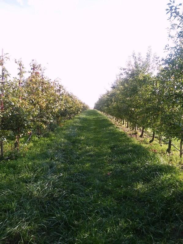 apple-orcard
