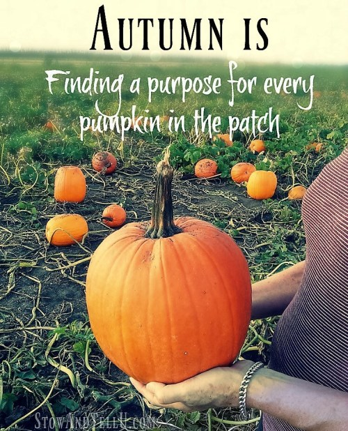 autumn-is-finding-purpose-for-every-pumpkin
