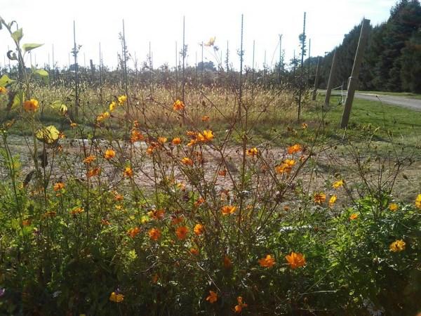 native flowers in a pumpkin patch - StowandTellU.com
