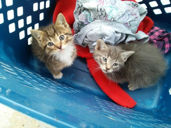 basket of kittens-stowandtellu