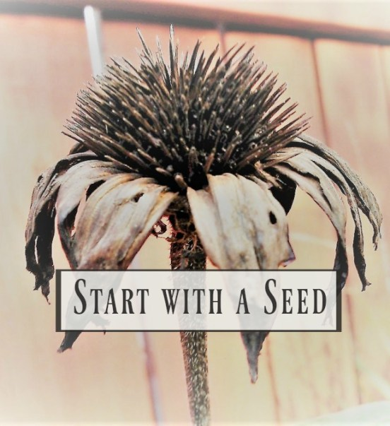 Start with a Seed part 3 - understanding | reading seed packets | stowandtellu.com