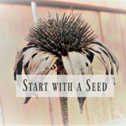 start-with-seed-challenge-intro-stowandtellu