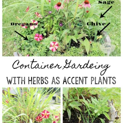 Inexpensive Container Gardening with Herbs as Accent Plants