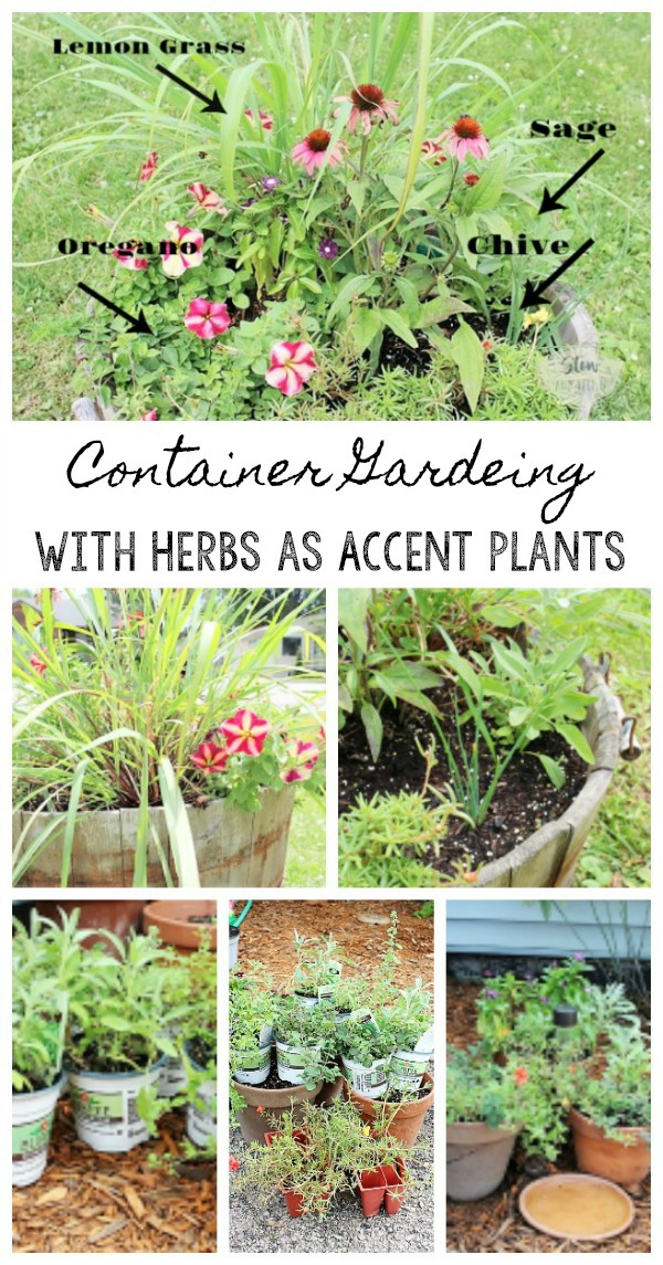 Use Herbs As Accent Plants To Flowers For Container Gardening |  Stowandtellu.com