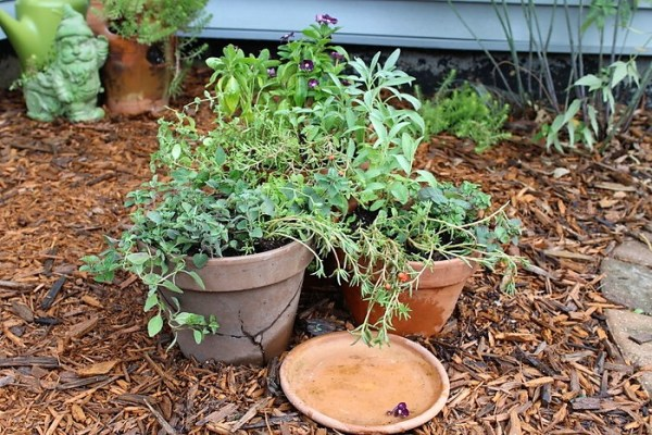 herb-flower-container-combo