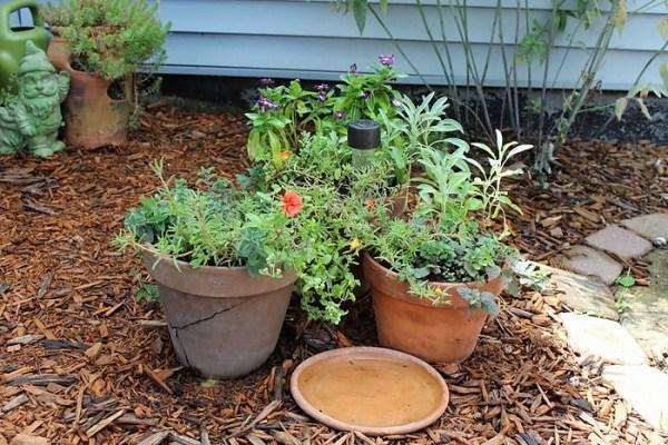 Herb and flower container garden combination | stowandtellu.com