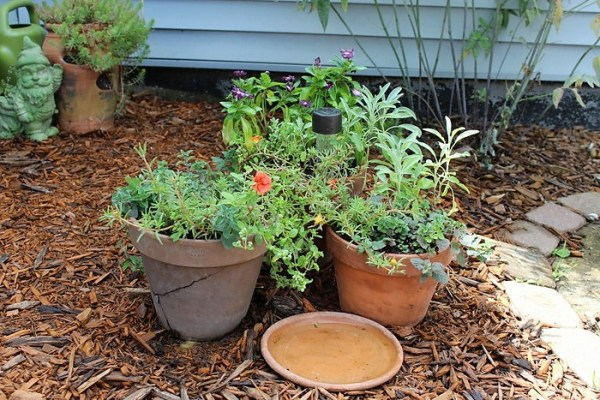 Herb and flower container garden combination | stowandtellu.com